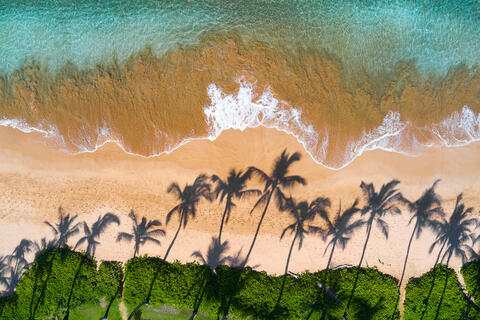 Palm tree shadows on the golden sand with stunning clear emerald colored water photographed from the air by Andrew Shoemaker