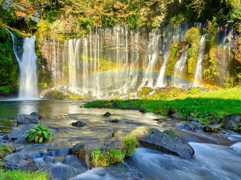 Shiraito Falls flowing heavily from the waters of Mount Fuji in Japan.  There is a rainbow appearing in the waterfall and fall colors surround this scene
