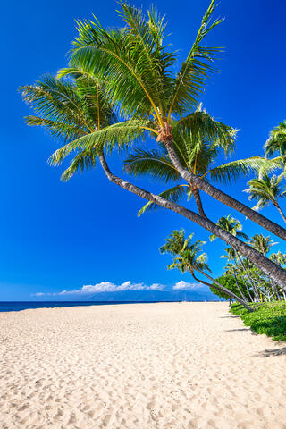 a perfect day on Ka'anapali Beach on the island of Maui with coconut palms and white sand.  This image was also featured on the cover of Maui No Ka Oi Magazine
