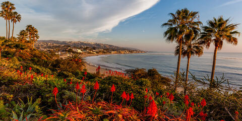 a classic panoramic image from Heisler Park overlooking Laguna Beach California at sunset with blooming aloe in the foreground