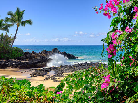secret beach in the morning with pink flowers in the foreground and an incoming wave to the beach.  Hawaii fine art photography by Andrew Shoemaker
