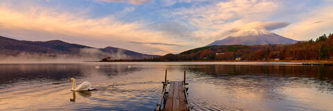 sunrise at lake yamanaka wish swans swimming in the calm morning waters and mount fuji reflecting in the lake with lenticular clouds above it