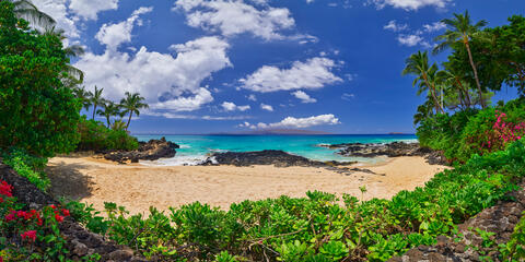 panorama of Secret Beach on the island of Maui with no people, foliage and red flowers in the foreground on a crystal clear Hawaiian day