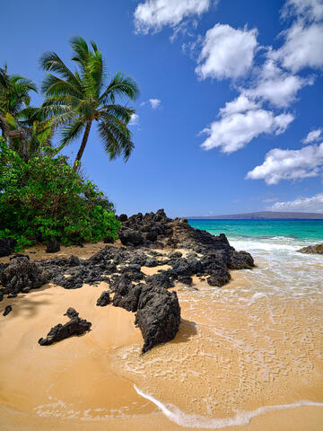 vertical view of a coconut palm and black lava rock in the foreground at Secret Beach in Makena, Maui