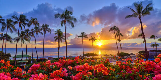 A very beautiful sunset at kaanapali beach with coconut palms and bright red flowers in the flowers in the foregound with the island of Lanai in the background
