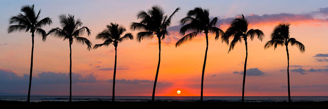 a beautiful row of seven palm trees along the coast in Kihei on the island of Maui Hawaii at sunset.  Panoramic photography by Andrew Shoemaker