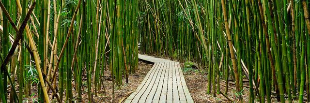 bamboo, bamboo forest, pipiwai trail, pipiwai, haleakala national park, hana, green