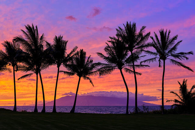 A vibrant South Maui sunset photographed from Makena with 8 coconut palm silhouettes in the foreground and west Maui in the background.