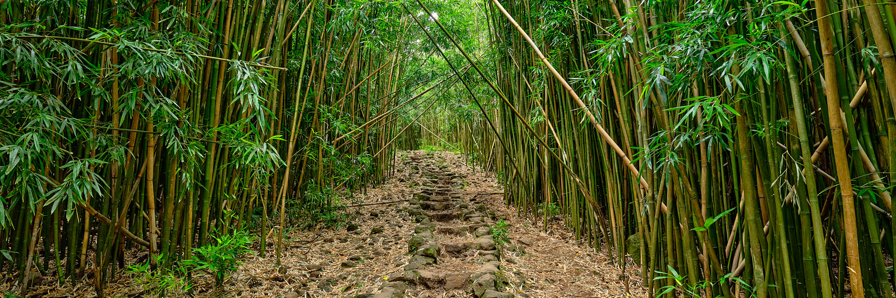 bamboo, hana, hawaii, maui, path, pipiwai trail, pipiwai, haleakala national park, green, panoramic, panorama, photo