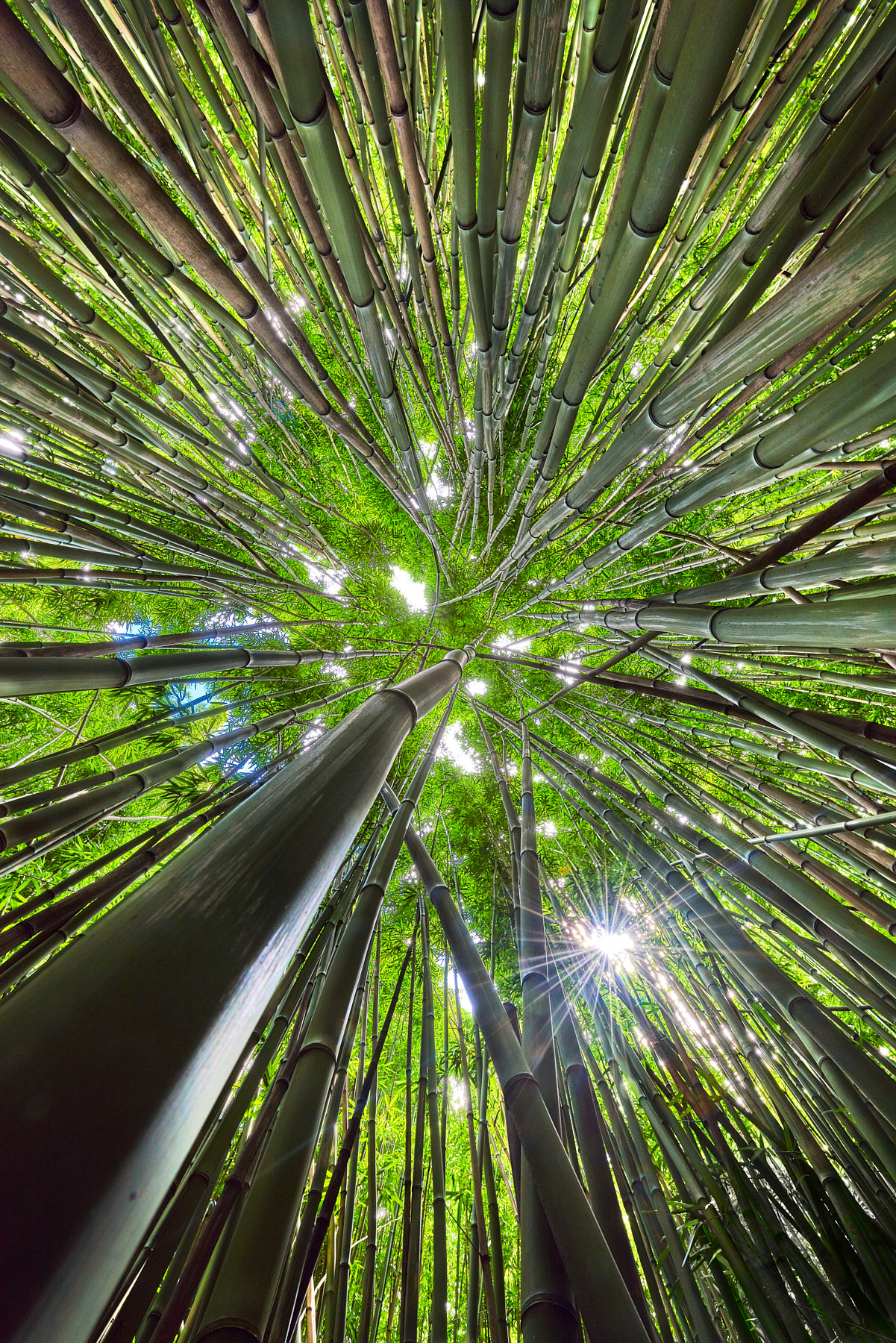 fun abstract image looking up towards the sun in the bamboo forest along the Pipiwai Trail near Hana, Maui in the state of Hawaii