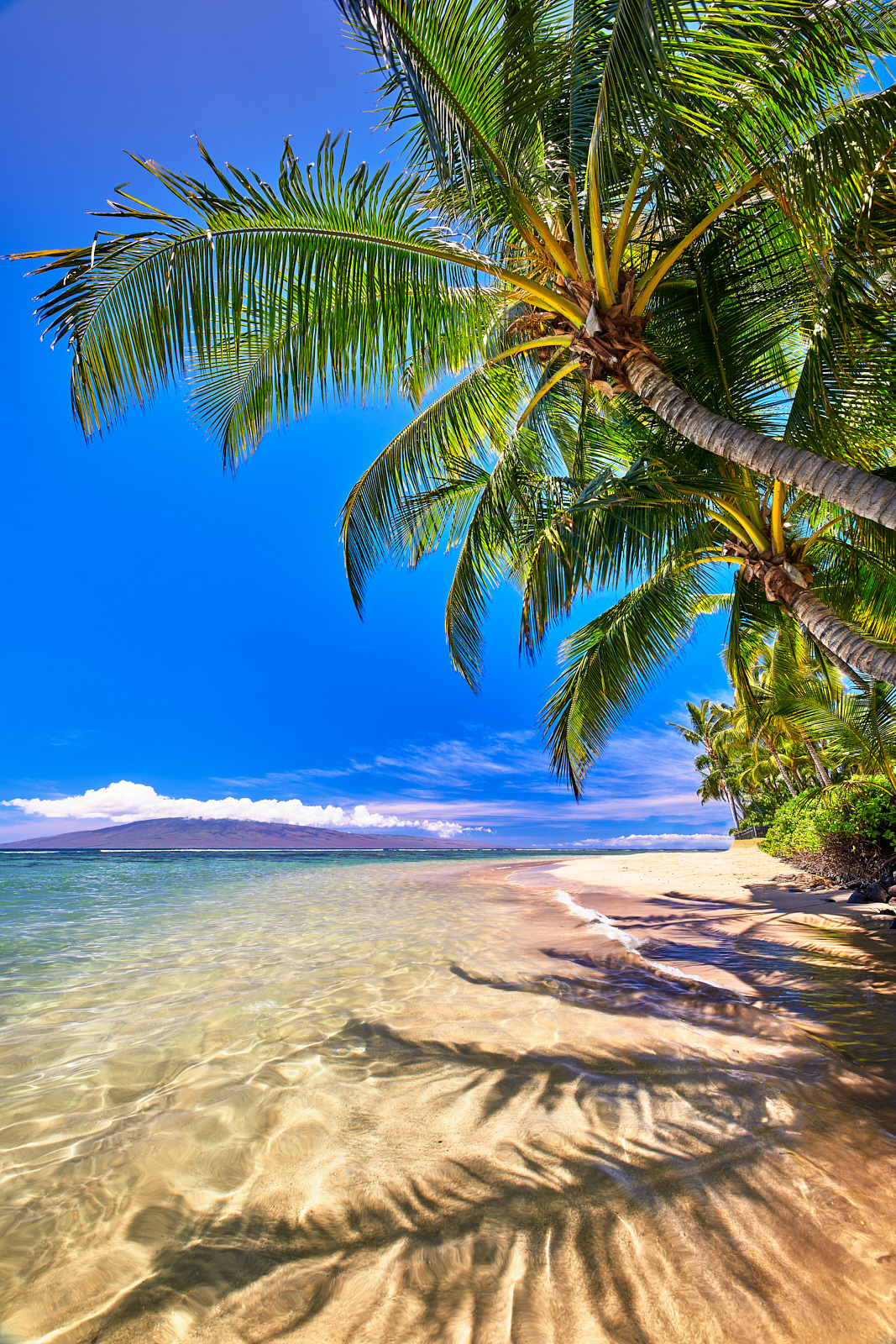 crystal clear water and beautiful coconut palms line the Lahaina coastline at Baby Beach on the island of Maui, Hawaii