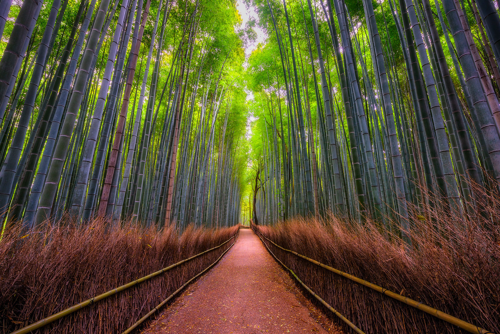 view looking down the Arashiyama bamboo forest in the morning in Kyoto, Japan