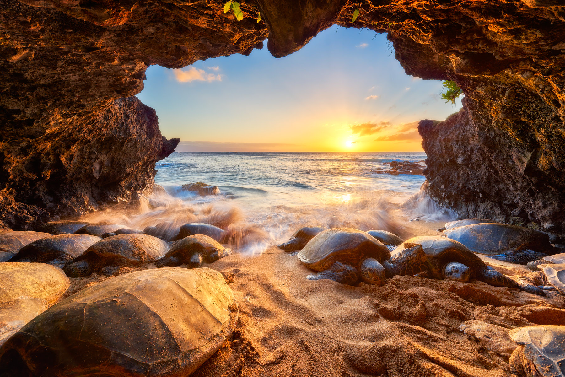 a sea cave packed with Honu (Hawaiian Green Sea Turtles) at sunset and incoming waves coming over the turtles on the island of Maui.  Photo by Andrew Shoemaker