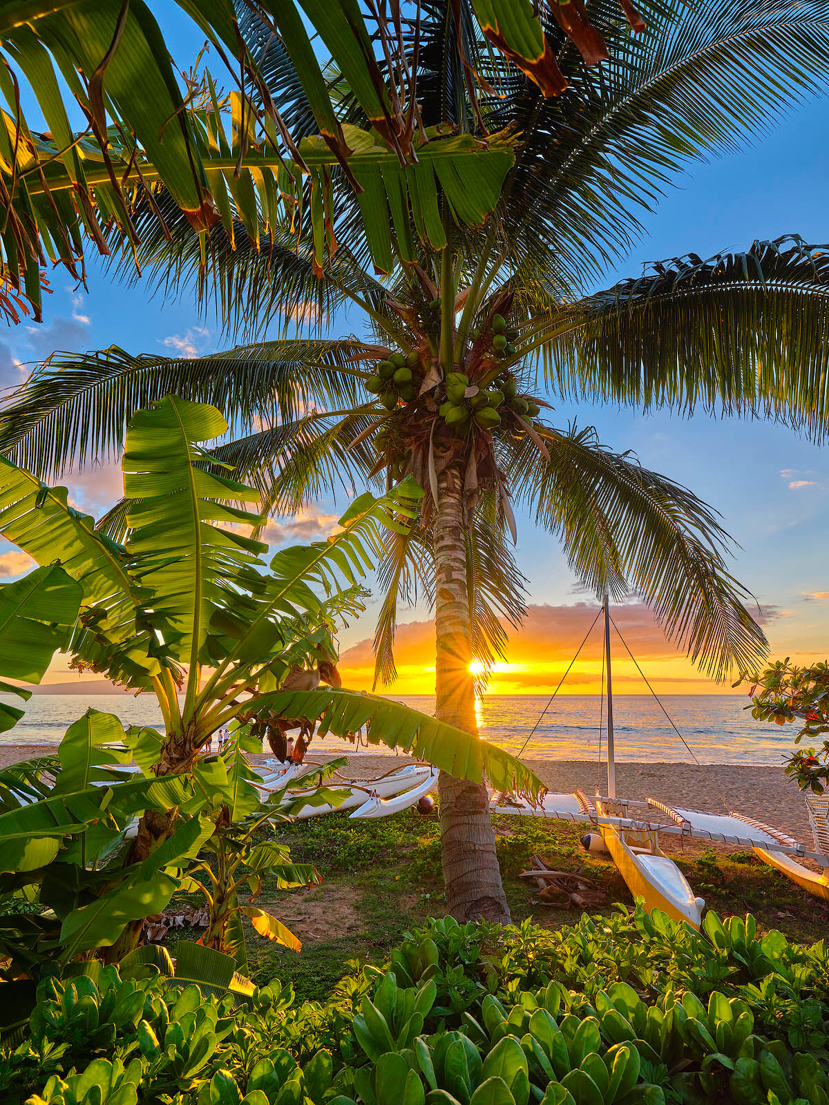 a beautiful sunset scene at Polo Beach in Wailea featuring a coconut palm tree, an outrigger and a sun star.  Photographed by Andrew Shoemaker