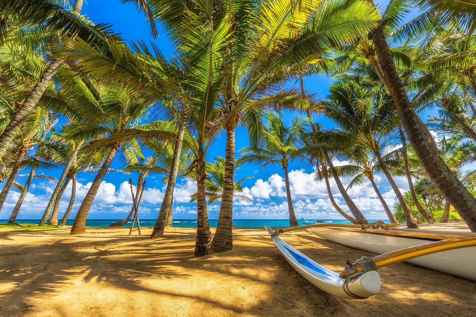 a classic blue sky view of the coconut palm tree cove at Mama's Fish House looking out at Kuau Cove on the island of Maui with an outrigger in the foreground