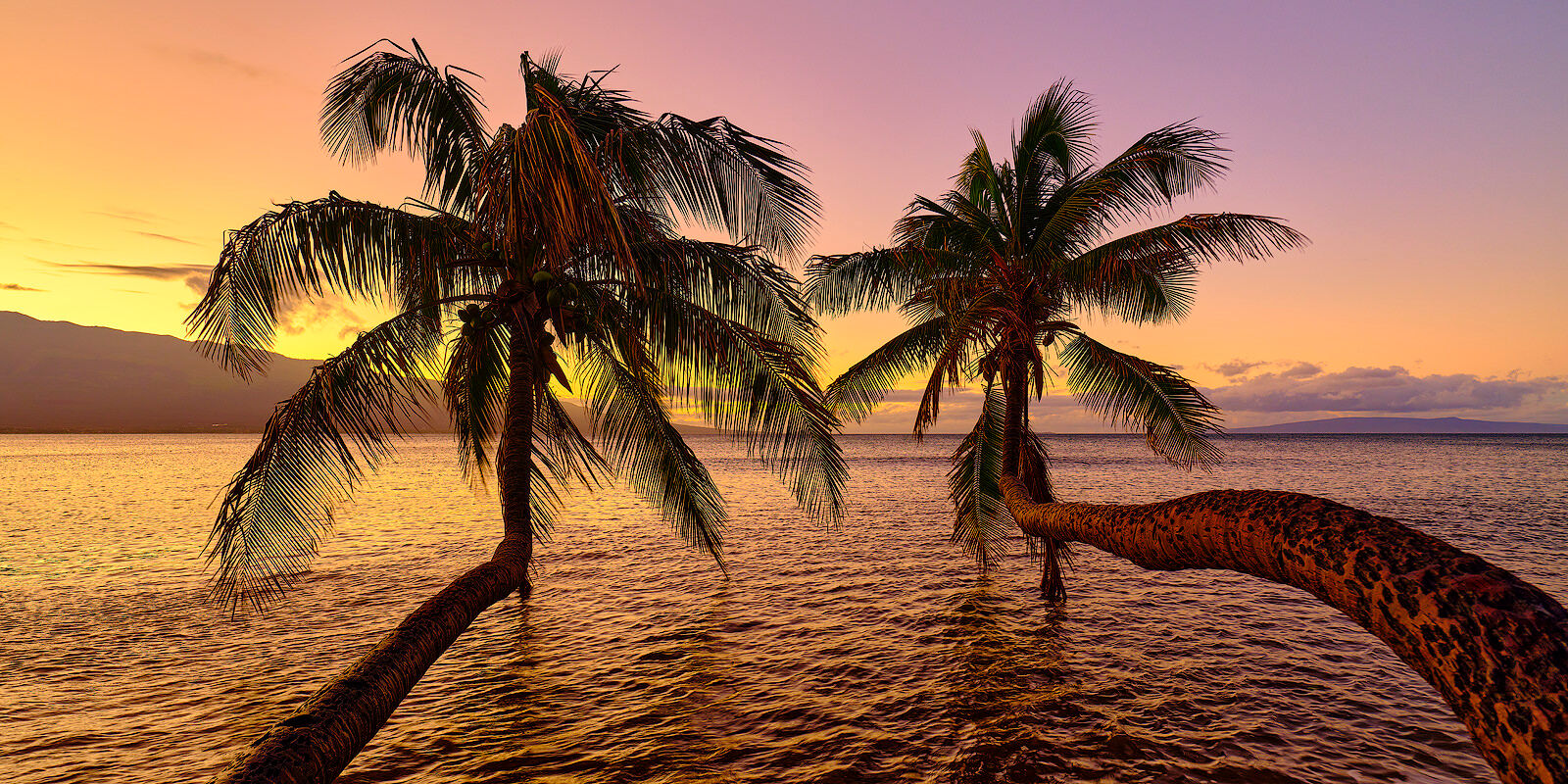 maalea, sunrise, tequila, maalea harbor, twin palms, bent palms, photo