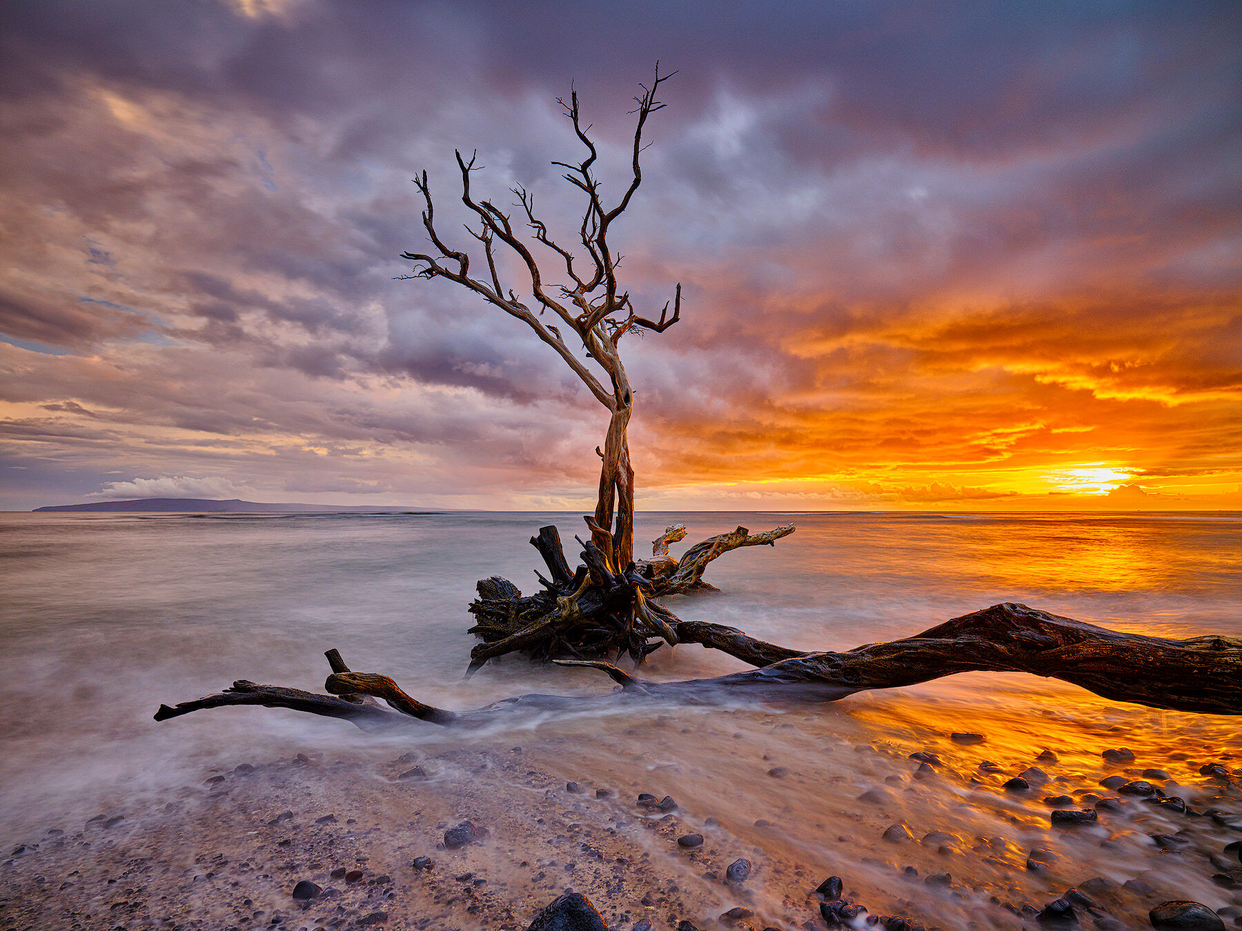 a lone keawe tree along the beach at Ukumehame on the island of Maui makes for a dramatic subject at sunset