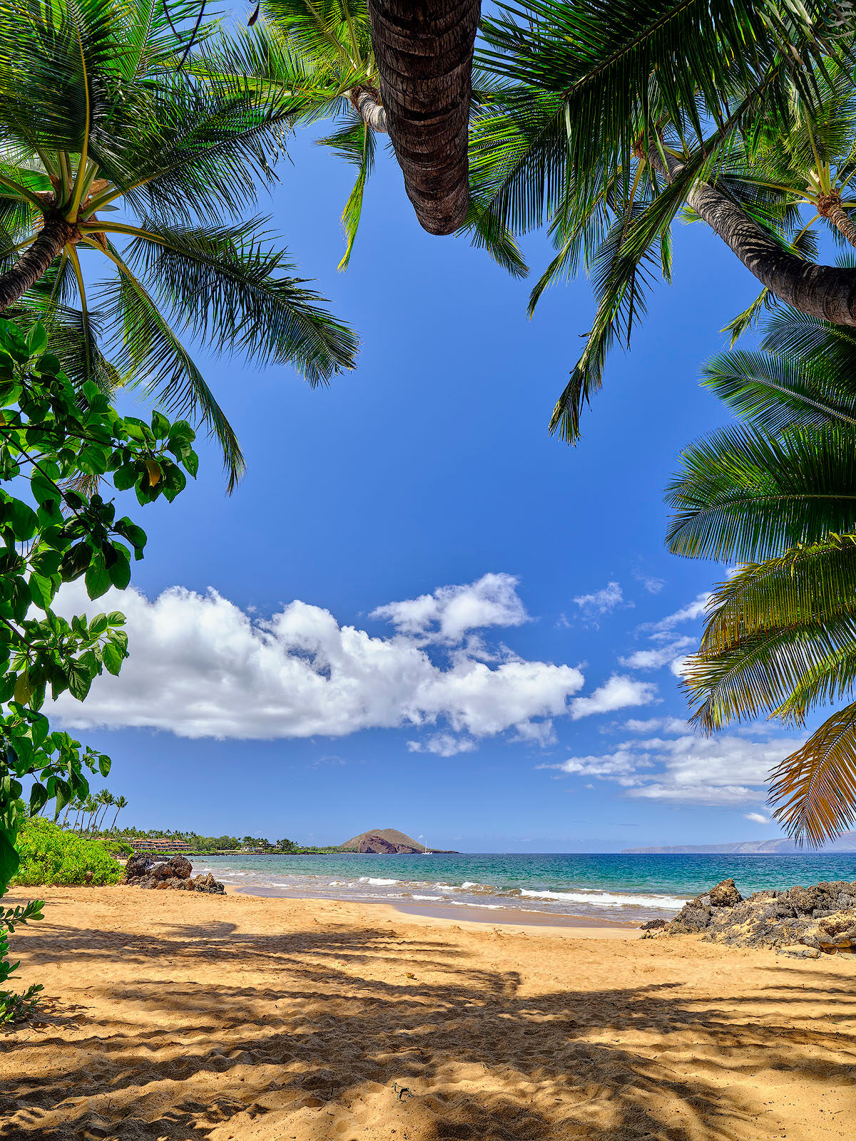 looking out of a palm tree cave in Makena/Wailea out to the beach and ocean.  Hawaii photography by Andrew Shoemaker