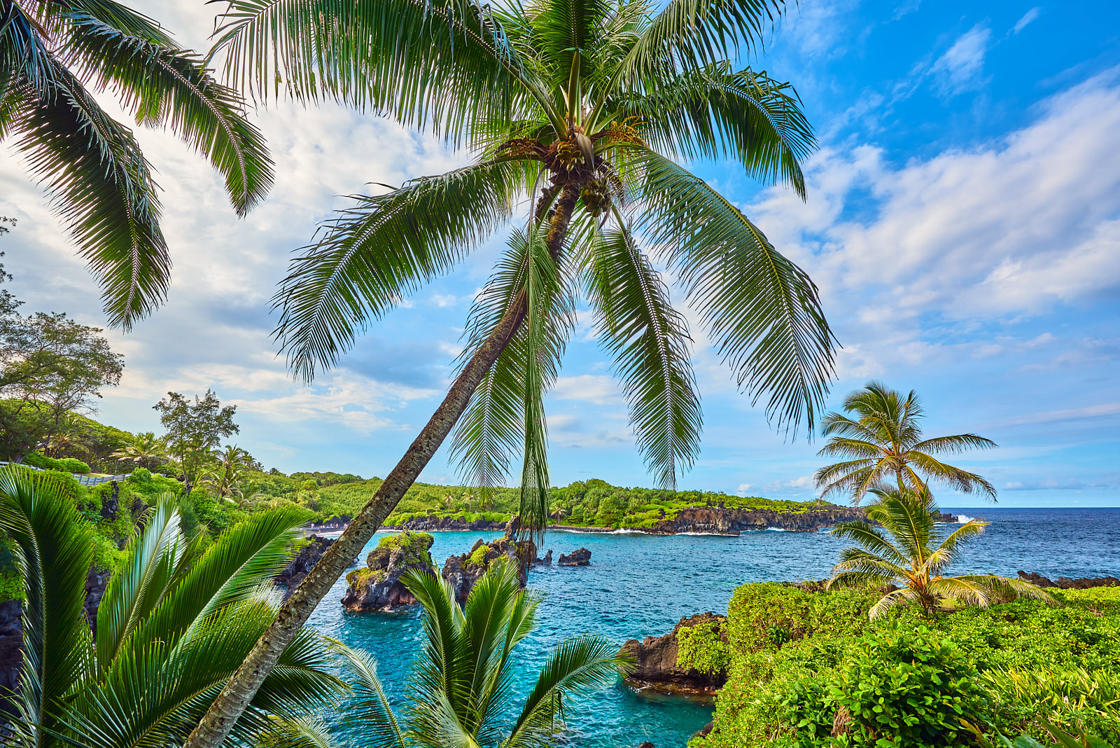 waianapanapa, waianapanapa state park, black sand, black sand beach, hana, palm, blue, coconut, photo
